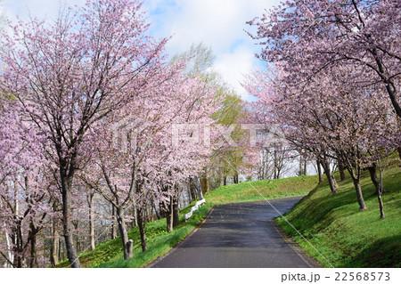 芦別旭ヶ丘公園の桜 22568573
