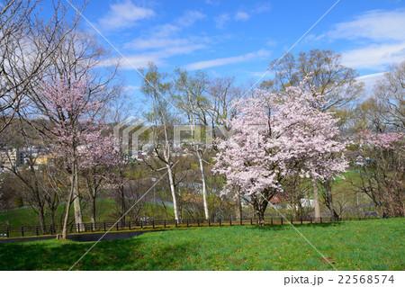 芦別旭ヶ丘公園の桜 22568574