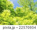 新緑 若葉 青葉の写真 22570934