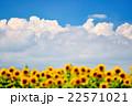 入道雲と向日葵 22571021