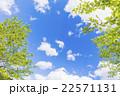 新緑 若葉 初夏の写真 22571131