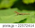 自然の中のトカゲ 22572414