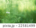 長居植物園の雑草に咲くハルジオン(大阪の風景) 22581499