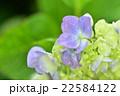 花 植物 クローズアップの写真 22584122