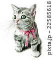 猫 子猫 動物のイラスト 22585618