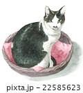 かごに入っている白黒の猫 22585623