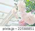 淡いピンクのバラ 22588851