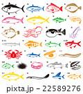 魚いろいろ 22589276