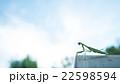 カマキリ 22598594