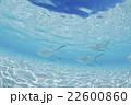 モルディブ 海中 海水魚の写真 22600860