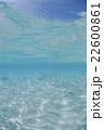 モルディブ 海中 海水魚の写真 22600861
