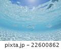 モルディブ 海中 海水魚の写真 22600862