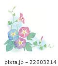 朝顔 花 つぼみのイラスト 22603214