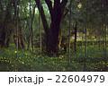 姫蛍 蛍 夜の写真 22604979
