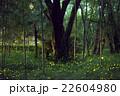 姫蛍 蛍 夜の写真 22604980
