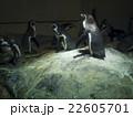 ペンギン合唱団 22605701