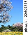 梅 水仙 春の写真 22605856