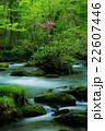 奥入瀬の春 22607446
