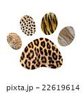 Wild animal footprint 22619614