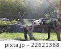 パンダ 22621368