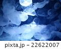輝くクラゲ 22622007