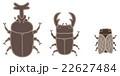 ベクター くわがた カブトムシのイラスト 22627484