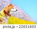 春だね~♪ 22631603