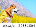 春だね~♪ 22631604