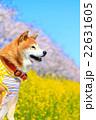 春だね~♪ 22631605