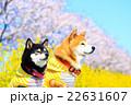 春だね~♪ 22631607