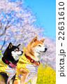 春だね~♪ 22631610