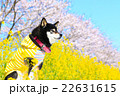 春だね~♪ 22631615