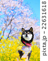 春だね~♪ 22631618