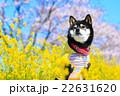 春だね~♪ 22631620