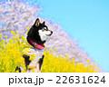 春だね~♪ 22631624
