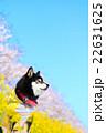春だね~♪ 22631625