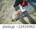捕獲された動物 22634962