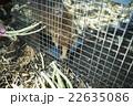 捕獲された動物 22635086