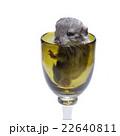 Cute chinchilla baby in glass 22640811