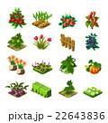 野菜 花 ベクタのイラスト 22643836