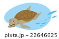 ウミガメ 22646625