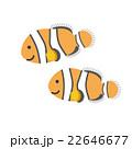 クマノミ 熱帯魚 魚のイラスト 22646677