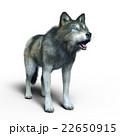 オオカミ 22650915