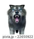 オオカミ 22650922