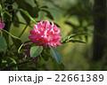 石楠花 22661389