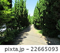 町の中の林道 22665093