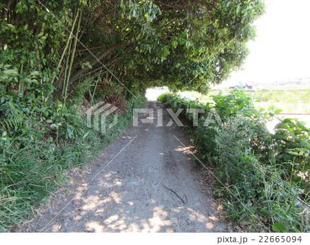 町の中の林道 22665094