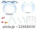 金魚鉢と金魚とメダカ 22668430