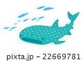 ジンベエザメ【沖縄・シリーズ】 22669781