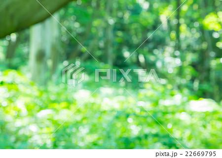 キラキラ ぼかし新緑イメージ 合成用背景素材 緑背景 植物 春 初夏 木漏れ日 緑とコピースペース 22669795